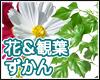 季節の花 観葉植物 管理
